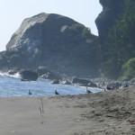 Beach seagull banner
