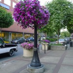 Eugene city center street scene
